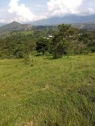 FINCA VEREDA SAN JOSE MUNICIPIO DE ARBELAEZ 43 FANEGADAS 275.200M2 PRODUCTIVAS.