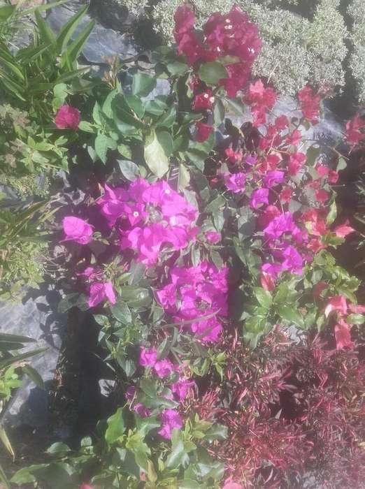 Vendo Plantas de Flores