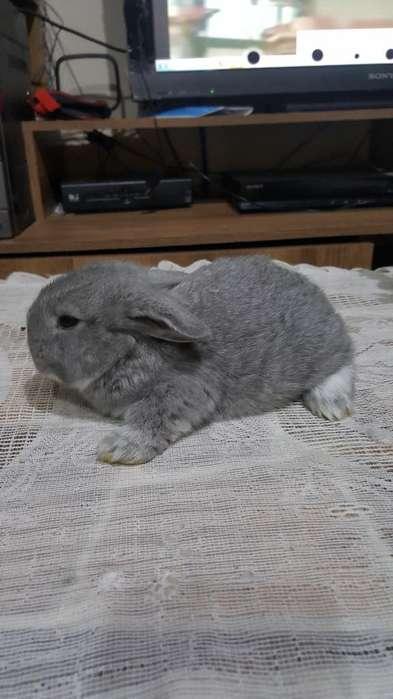 Vendo Hermosos Conejos a 5 Dólares C/u