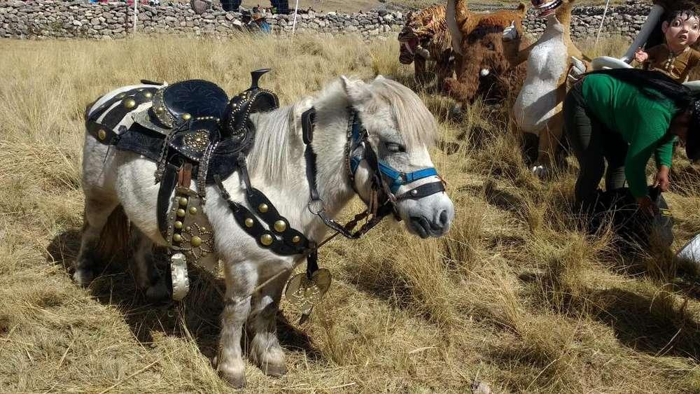 Hermosa pony