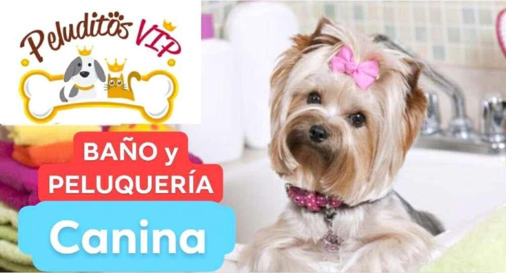 Baño Y Peluquería Canina