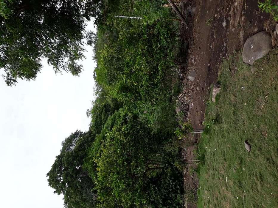 Finca de 50 hectreas ubicadas en Lebrijas en la Uribe