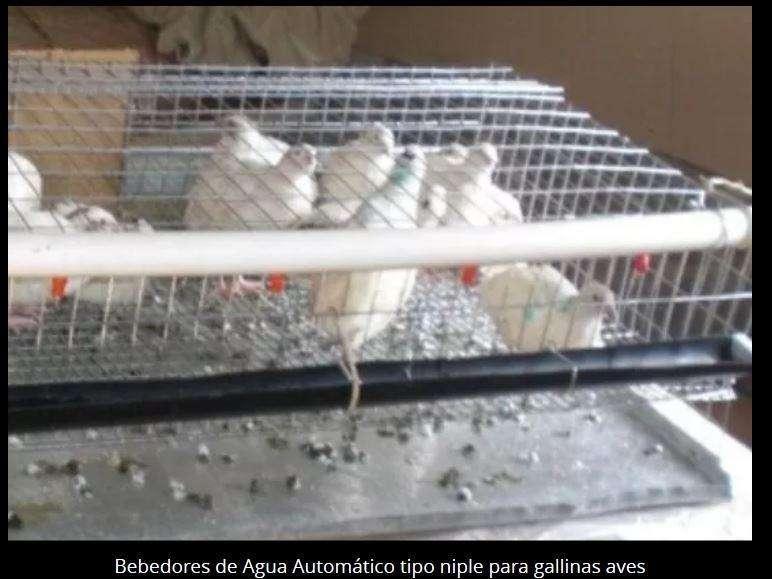 Sistema de Bebedero automático para pollos