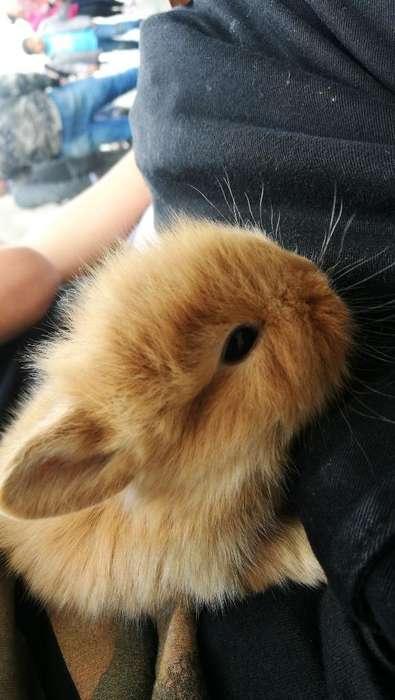 Bellos Conejos Vacunados