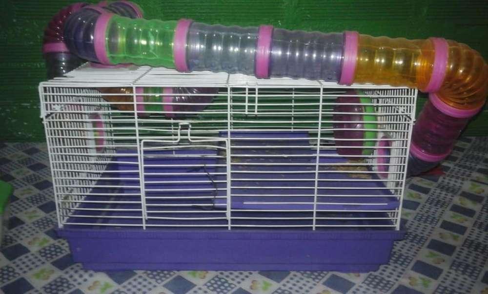 Gangaso jaula para hamsters