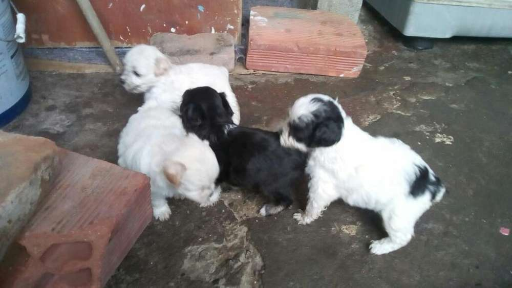 Lindos Cachorritos