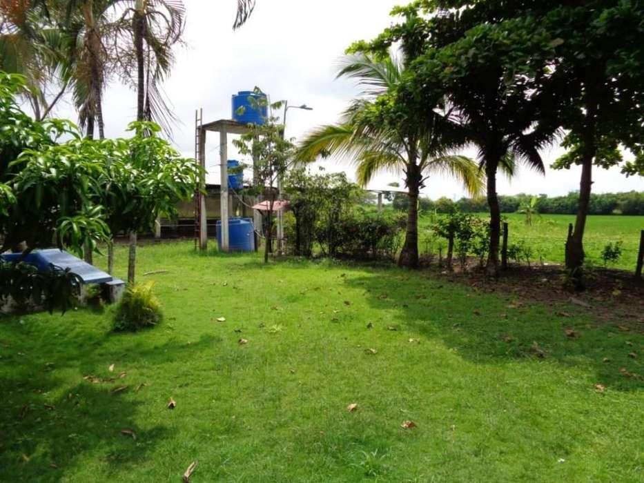 Venta de Granja Porcina y Terreno con Arroz en Santa Lucia - C. Herrera - A. Maidana