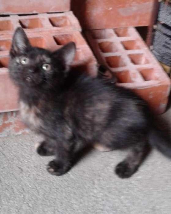 Gatica Carey en Adopción