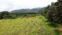 ID 105194 - Terreno Agrícola En Venta en Huancabamba