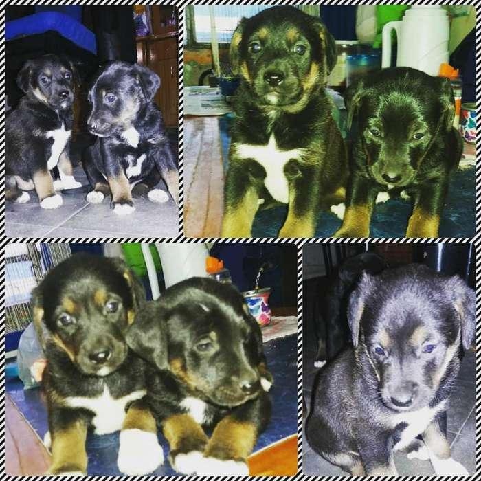 Hermosos cachorros en adopción responsable.