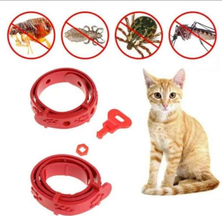 Collar Antipulgas <strong>perro</strong>s Gatos