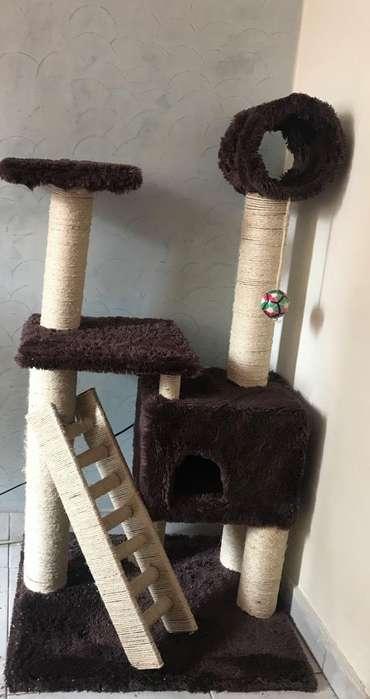 Gimnasio <strong>gato</strong>s