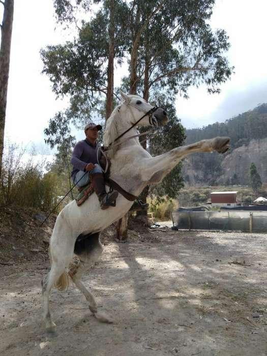 <strong>caballo</strong>s de Oportunidad, Alta Escuela!