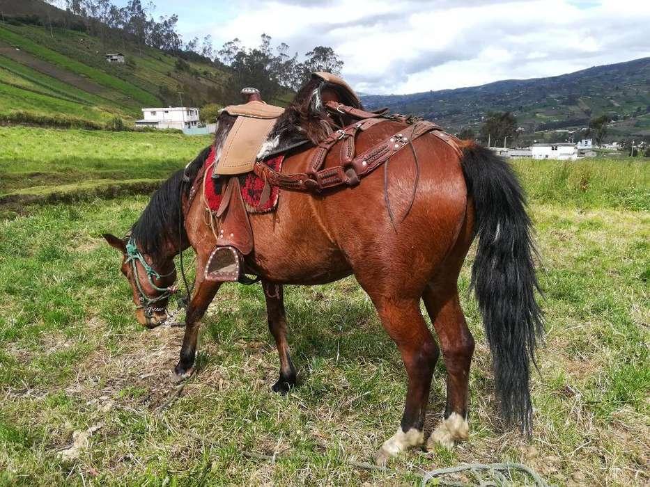 <strong>caballo</strong>
