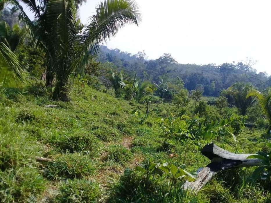 Chacra de 80 hectareas