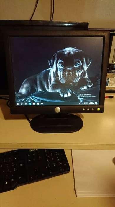 Monitor Dell 15