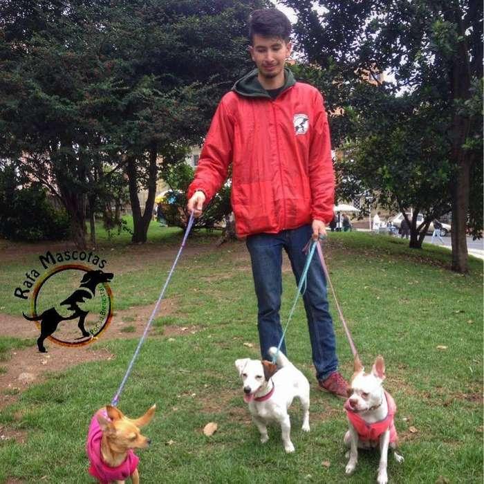 Paseos Caninos