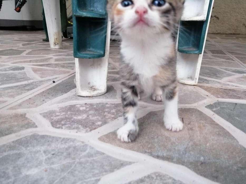 Doy en adopcin gaticos