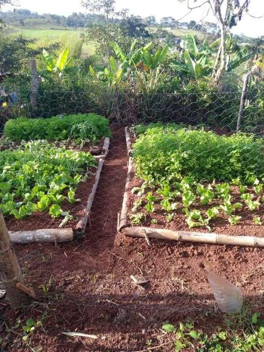 Venta hermosa finca 3.5 hectareas DAGUA - EL PIÑAL