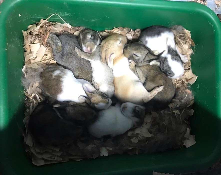 Criadero de Conejos Bogotá 3224499925