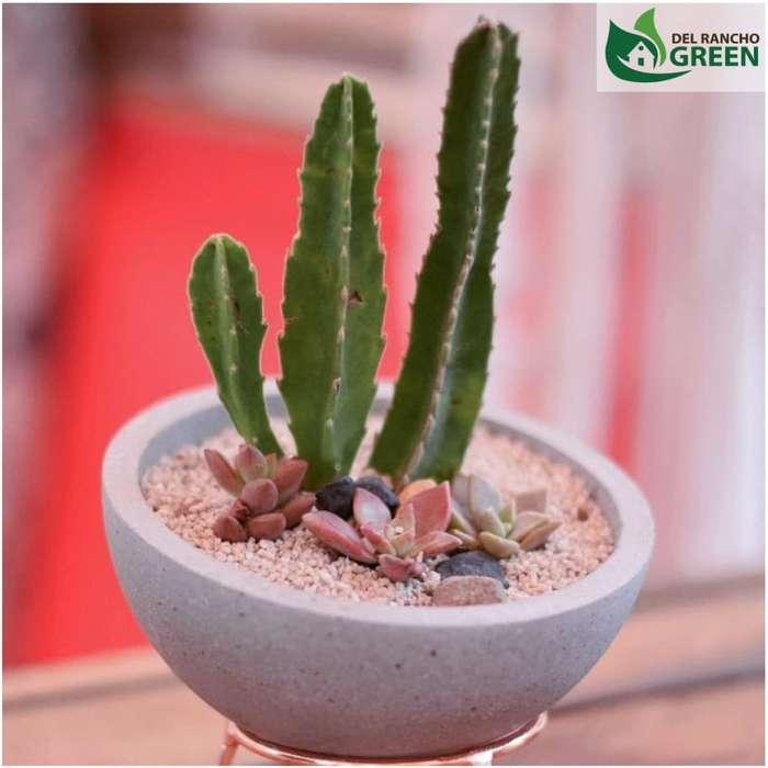 Materos de Cemento con Planta Incluida