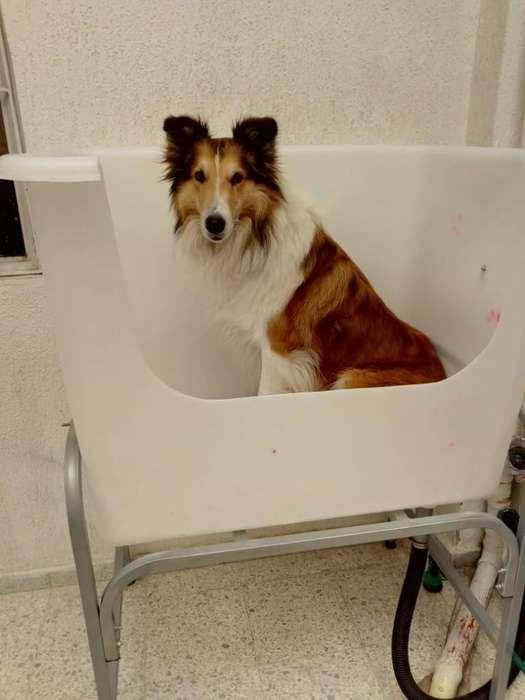 Tina Bañera Peluquería Canina Y Felina