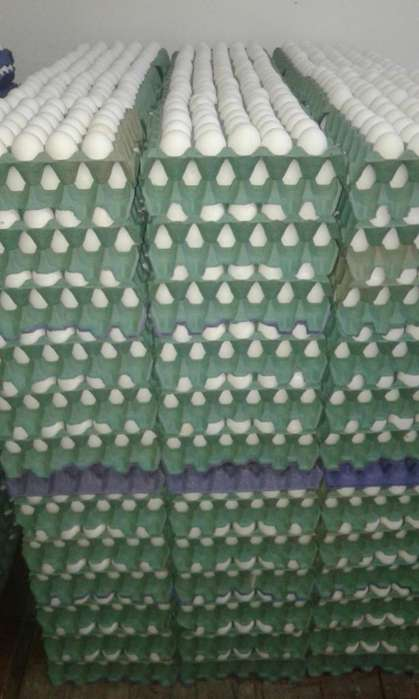 Huevos blancos N1
