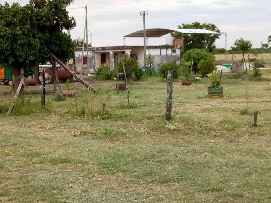 Campo mixto 100 hectareas