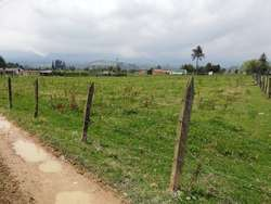 Lote-9200mt