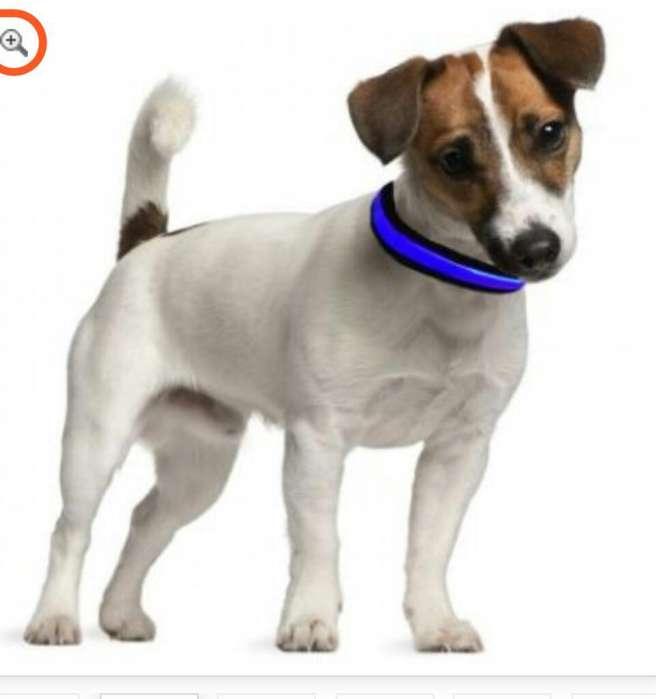 Busco Perro O Cachorro en Adopcion