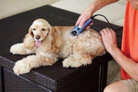 Maquina Cortadora de pelo Para Perros HTC