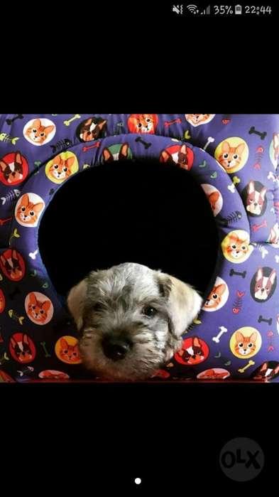 Deceo Adoptar Un <strong>perro</strong>