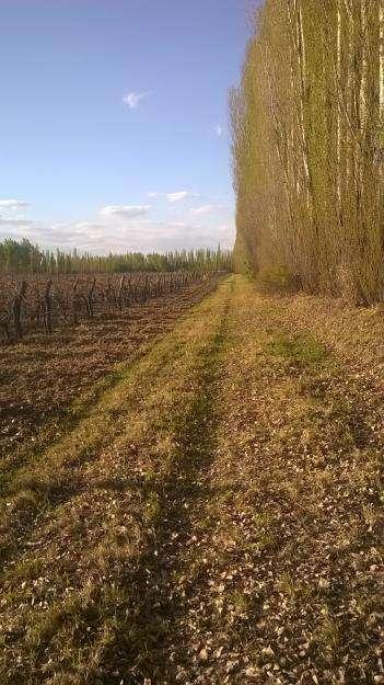 Oportunidad!! Finca de 11 hectáreas en San Rafael Mendoza