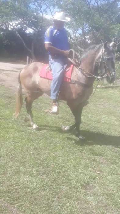 Se Vende <strong>caballo</strong>