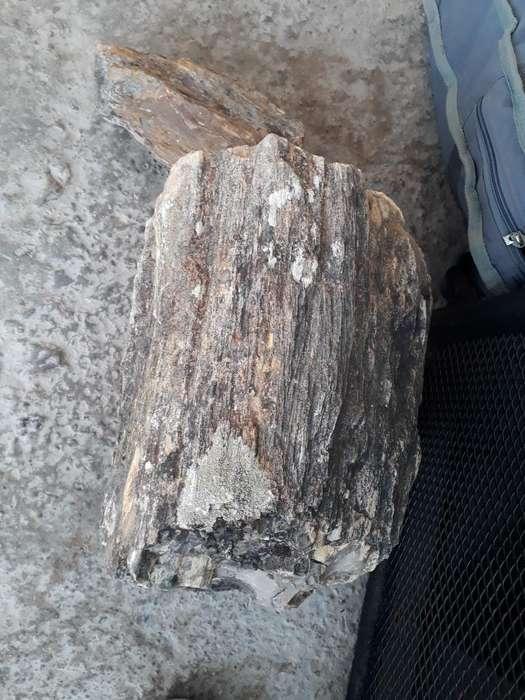 Fósil de Árbol (tronco Petrificado)