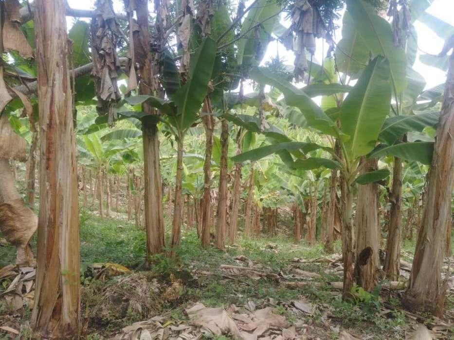 vendo tierras 43 hectáreas en quevedo