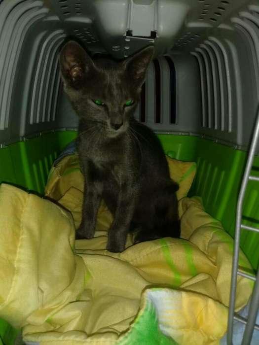 Adopcion de Gato
