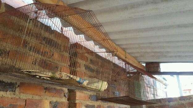 Jaula para pájaros, hamster, conejillo de indias.