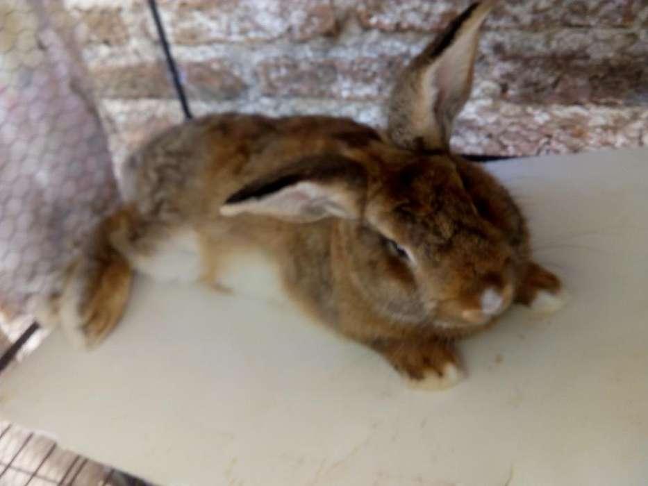 Vendo Conejo