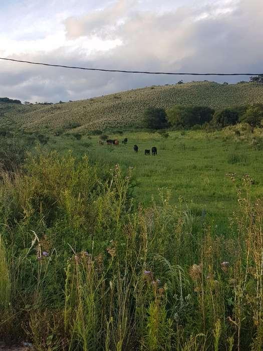 Vendo <strong>campo</strong> en San Jose de La Dormida
