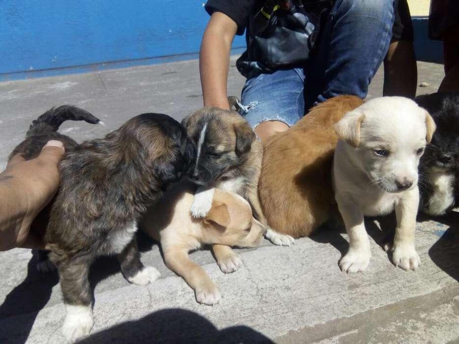 Doy en Adopcion Estos Cachor@s