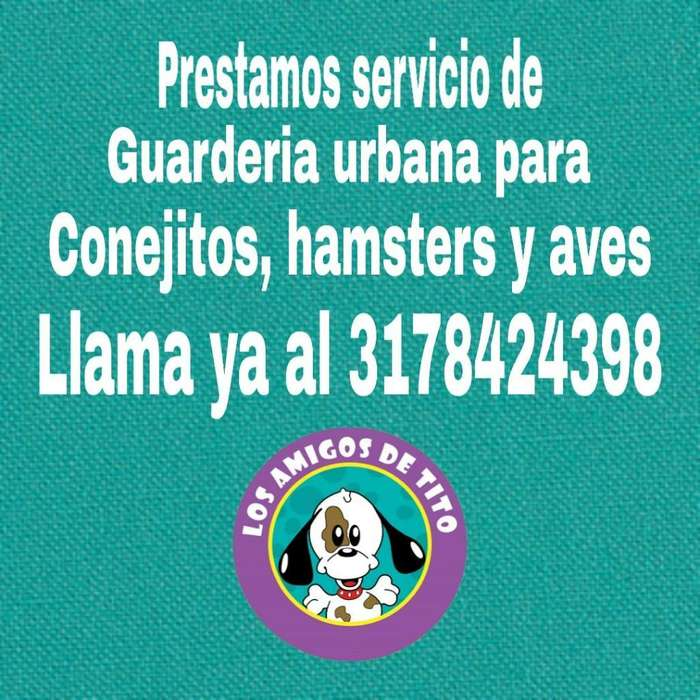 Guardería Conejos, Hamsters, <strong>aves</strong>, Peces