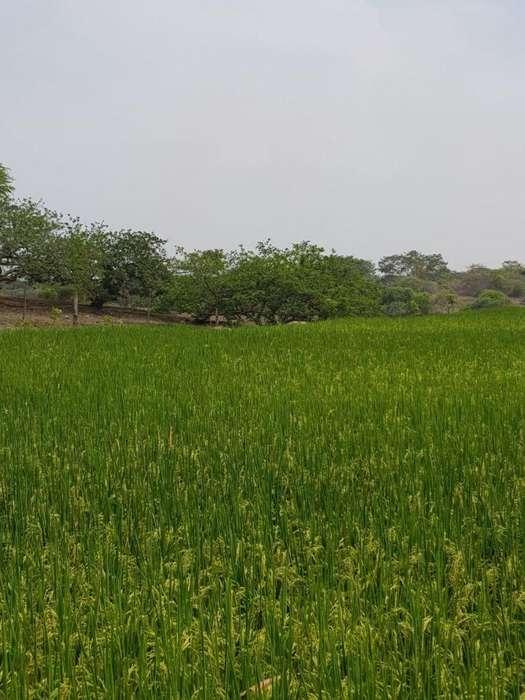 Terreno de Venta agrícola de 17.530m2 en Santa Lucia