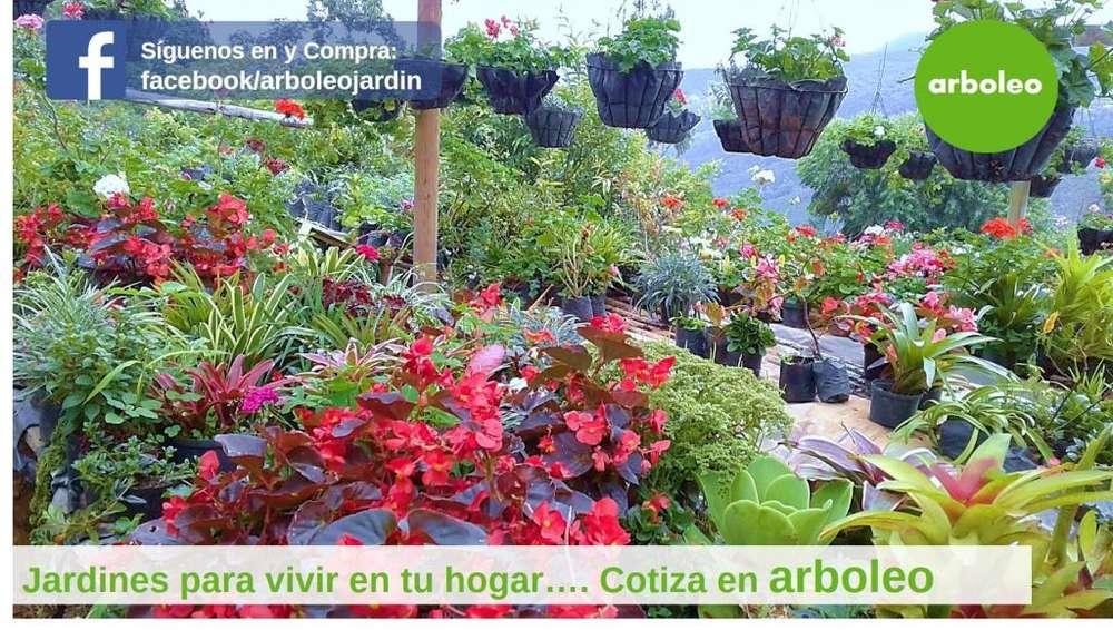 Diseño de Jardines y mantenimiento Vivero en Cali. Arboleo