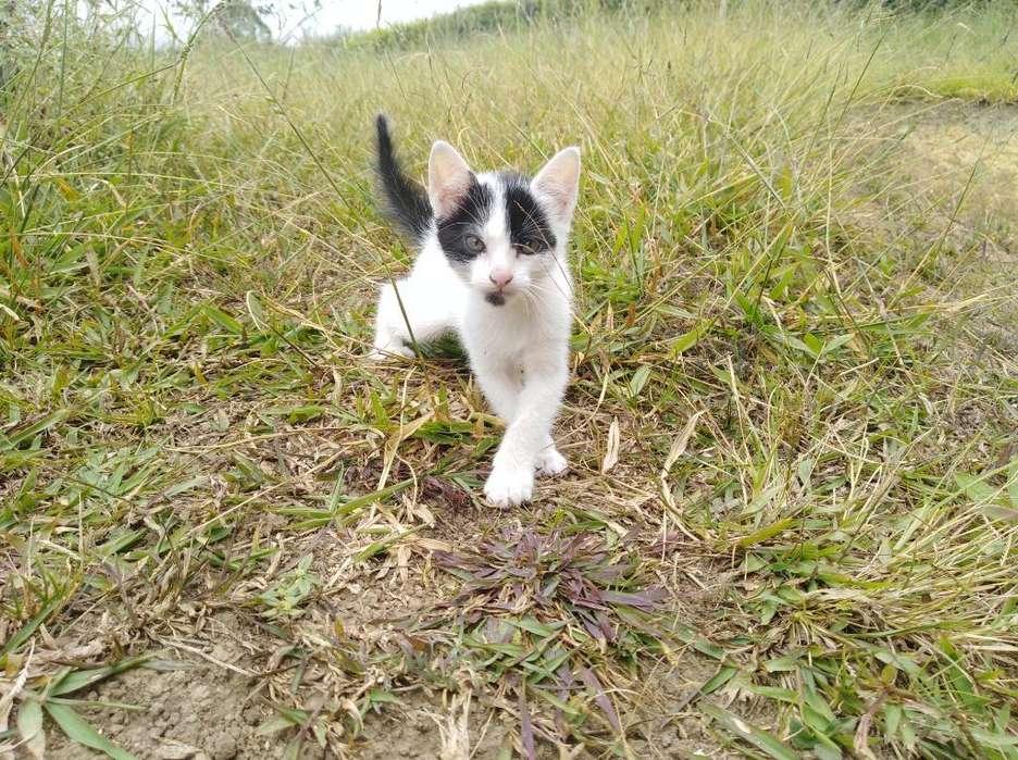 Precioso Gatico en Adopción Muy Sano