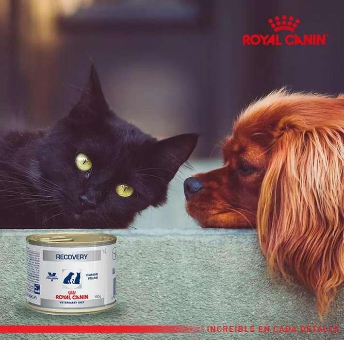 Recovery Royal Canin Perro Gato