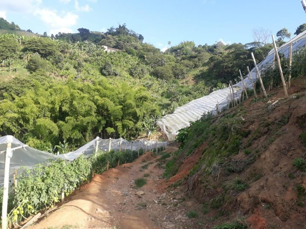 Finca productiva sevilla valle 90518-0 - wasi_1431254