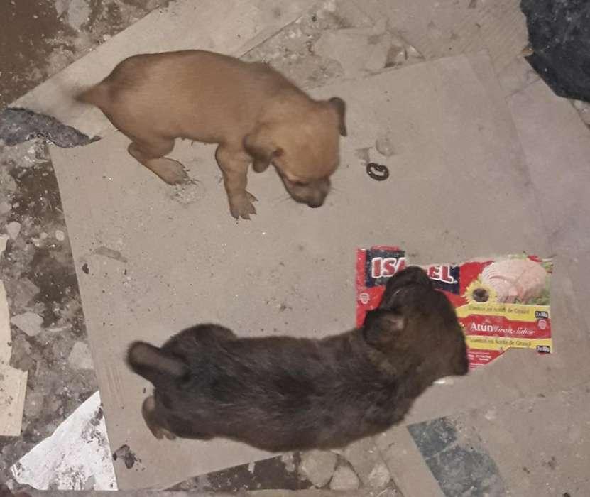 Doy en <strong>adopcion</strong> Lindos Cachorros