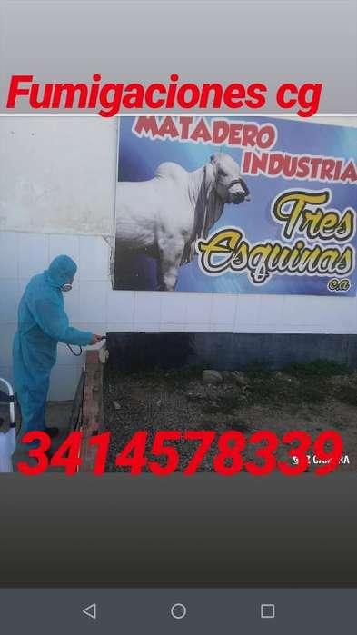 Control de Plagas Cg... 3413578339