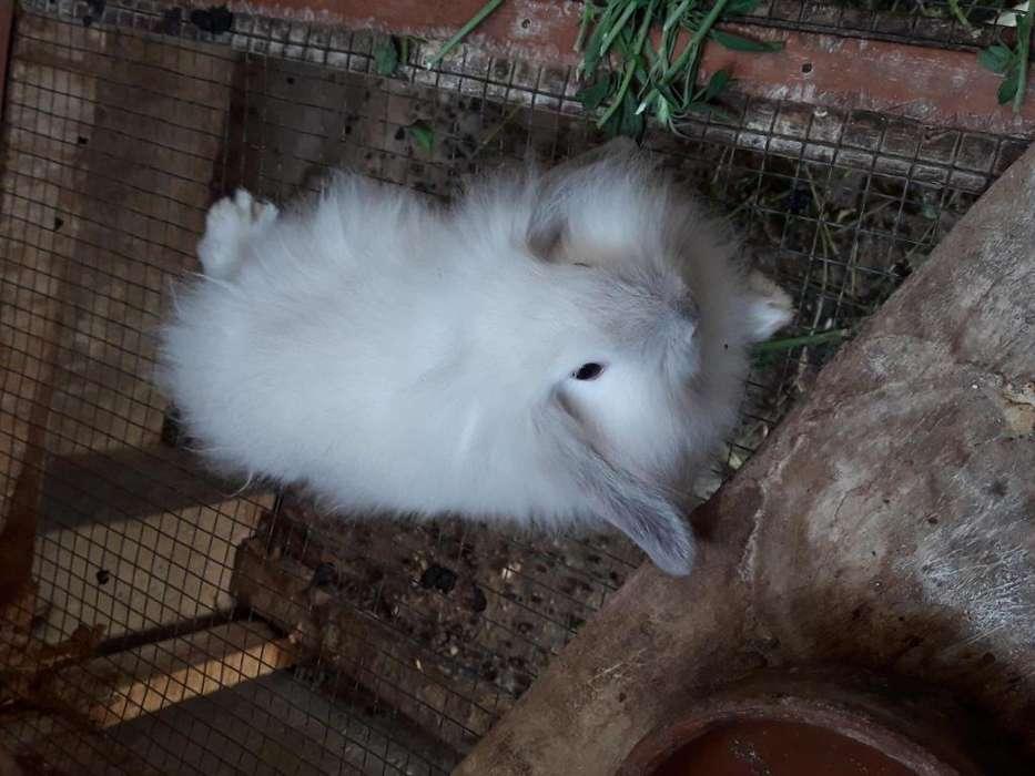 Conejos fusion lop